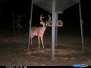 2011-2012 Deer