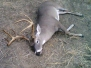 2012-2013 Deer