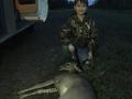 Luke's deer