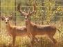 2018-2019 Deer